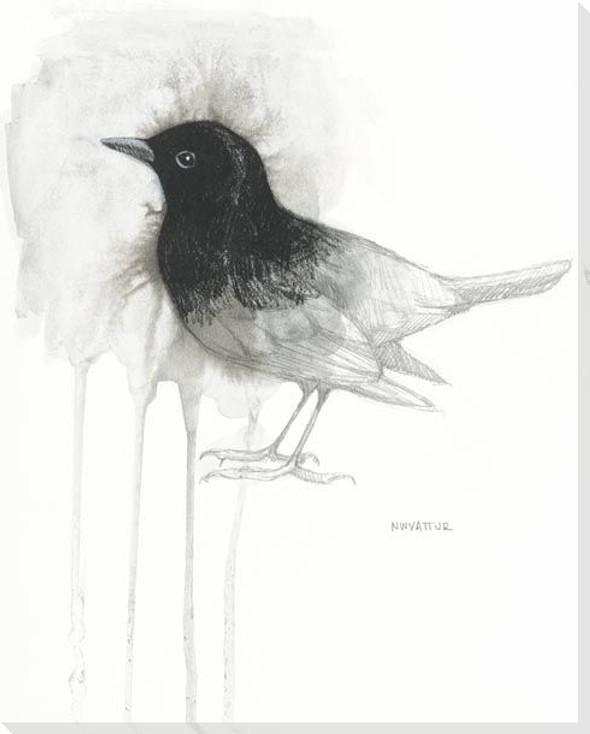 Blackbird Study Wrapped Canvas Giclee Art Print Wall Art