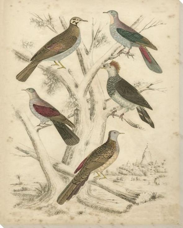 Avian Habitat Birds I Wrapped Canvas Giclee Print Wall Art
