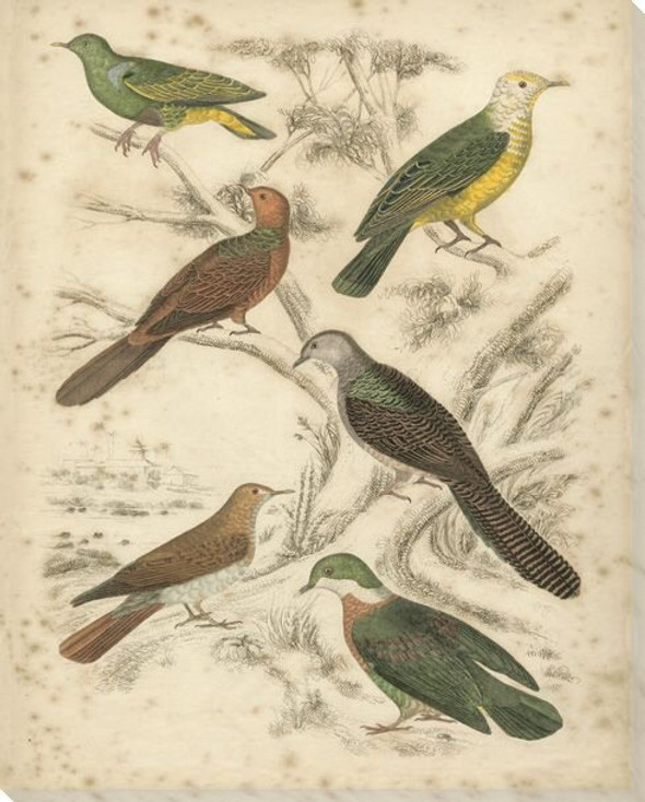 Avian Habitat Birds II Wrapped Canvas Giclee Print Wall Art