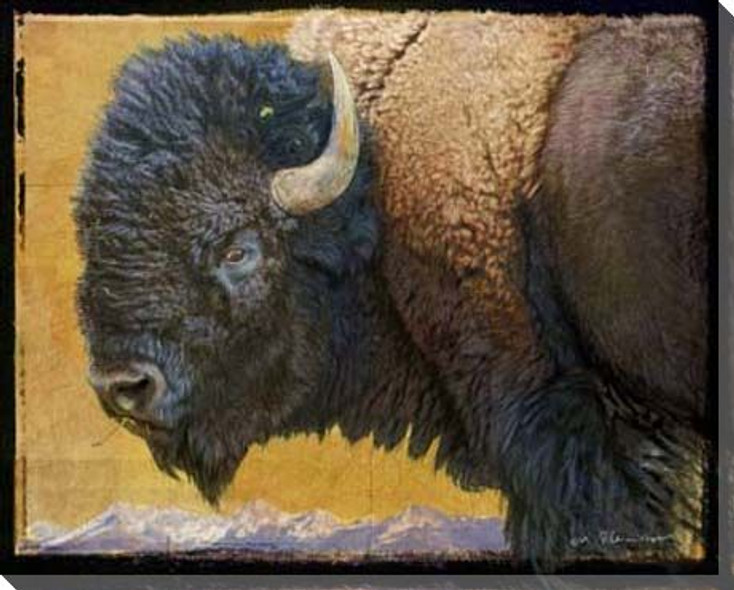 Bison Portrait III Wrapped Canvas Giclee Print Wall Art