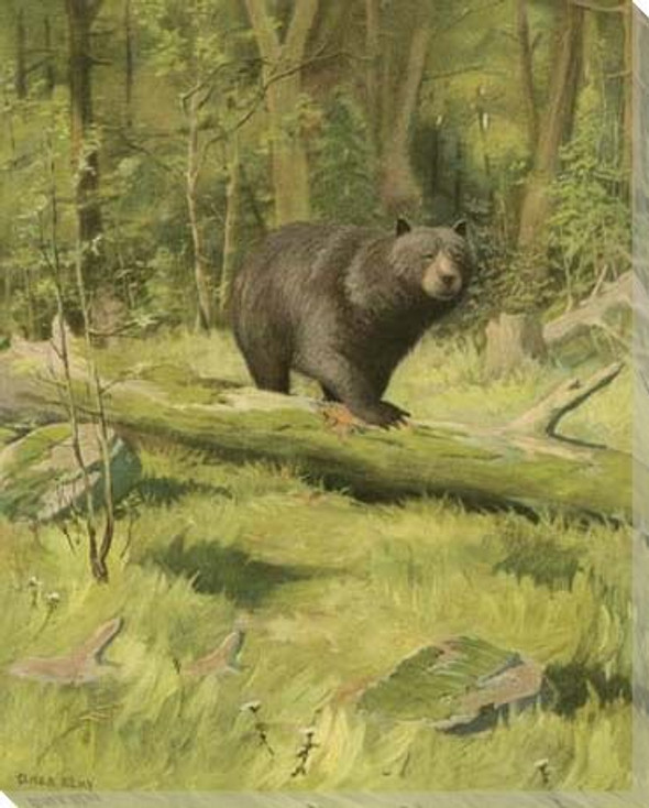 Black Bear in the Wild Wrapped Canvas Giclee Print Wall Art