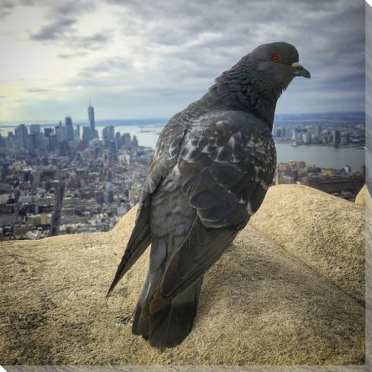 Bird's Eye View Pigeon Wrapped Canvas Giclee Print Wall Art