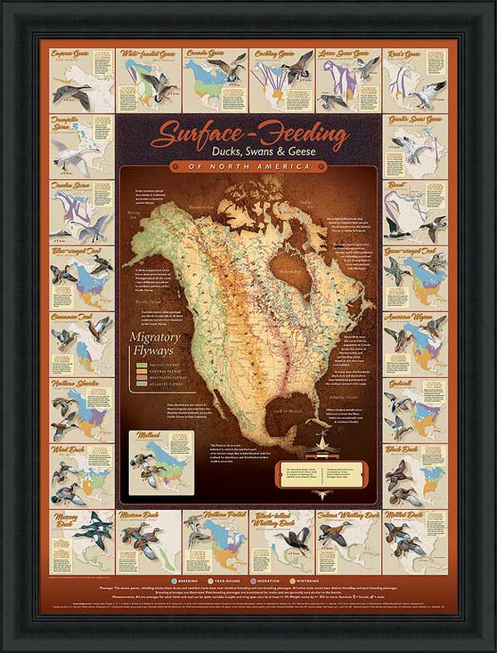 Migration Map Surface Feeding Waterfowl Framed Poster Print Wall Art