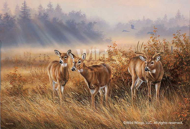 Limited Edition Meadow Mist Whitetail Deer Canvas Giclee Art Print