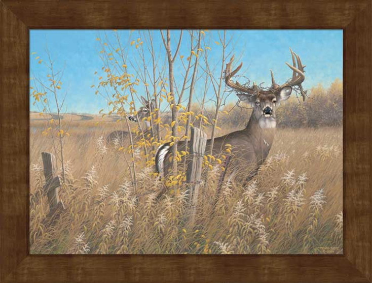 Large The Old Warrior Whitetail Deer Framed Canvas Art Print Wall Art