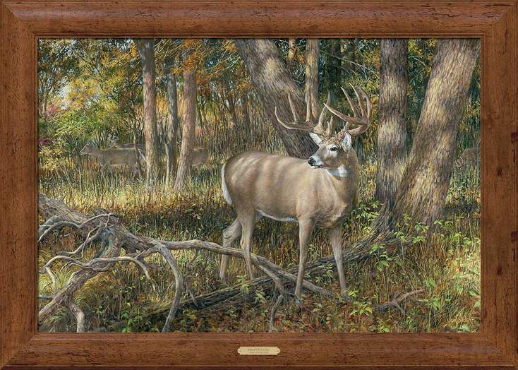 Shadowland Whitetail Deer Framed Canvas Art Print Wall Art
