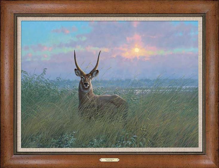 At Home Waterbuck Framed Canvas Giclee Art Print Wall Art