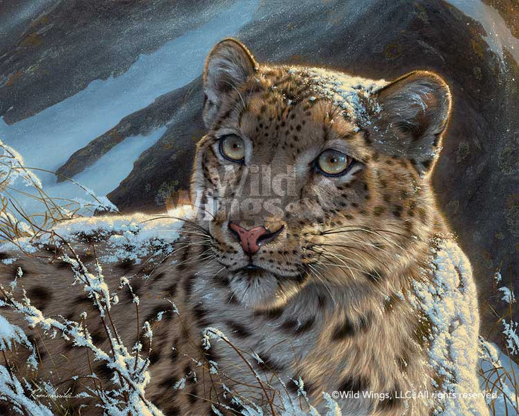 Snow on Snow - Snow Leopard Canvas Giclee Art Print Wall Art