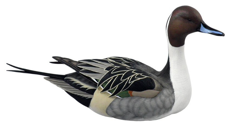 Swan Lake Pintail Hand Painted Duck Decoy Sculpture by Sam Nottleman