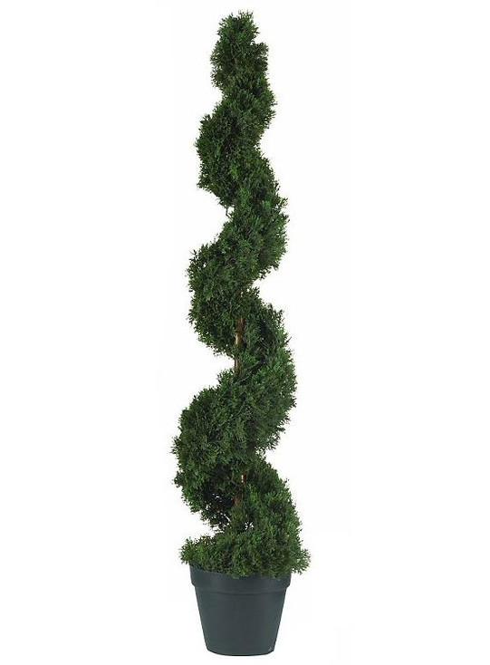 4' Cedar Spiral Silk Tree, Indoor Outdoor