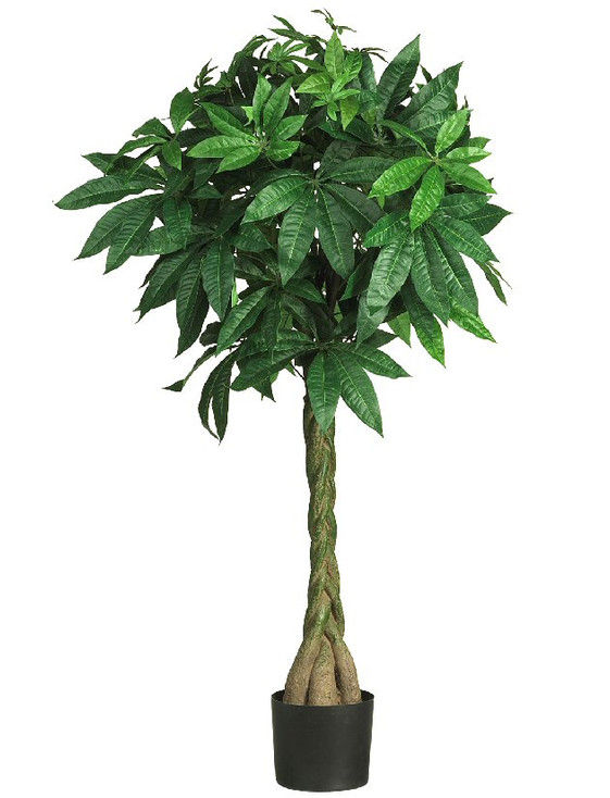 """51"""" Money Silk Tree"""
