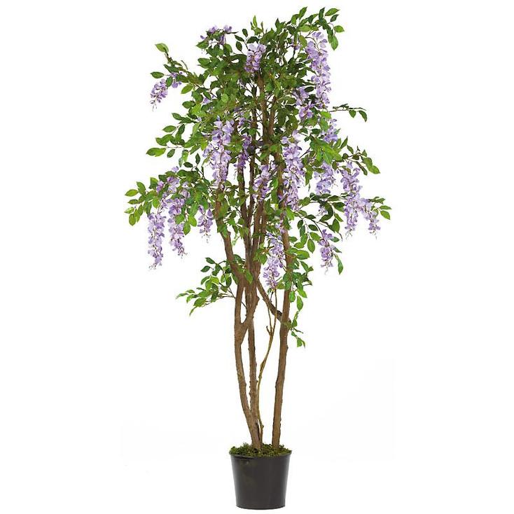 5' Wisteria Silk Tree - Purple