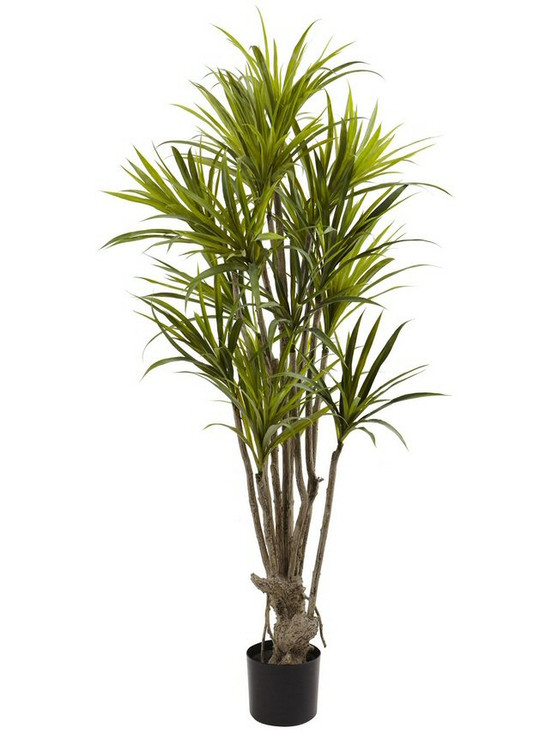 5' Dracaena Silk Tree