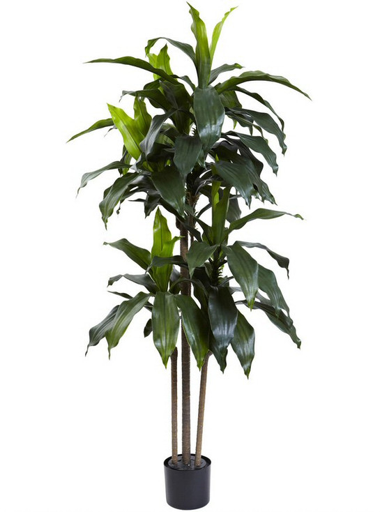 5' Dracaena Silk Tree UV Resistant, Indoor Outdoor