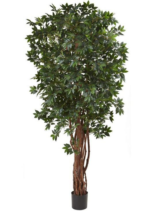 7.5' Lychee Silk Tree