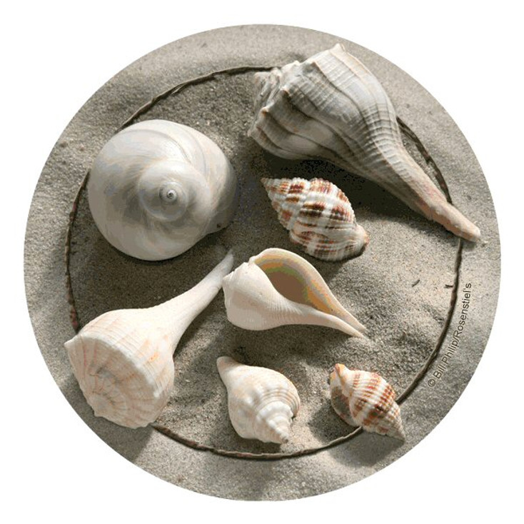 Shells Absorbent Round Beverage Coasters by Bill Philip, Set of 8