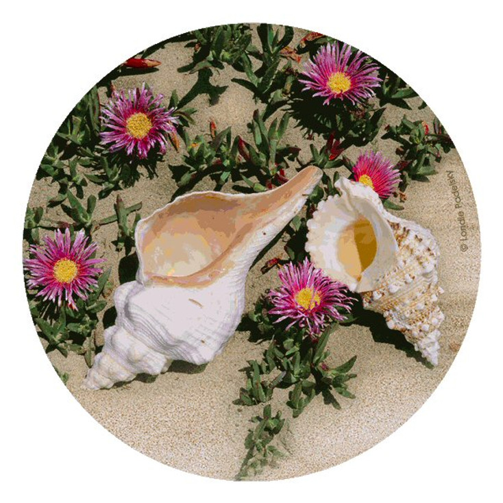 Shells and Flowers Beverage Coasters by Londie Padelsky, Set of 12
