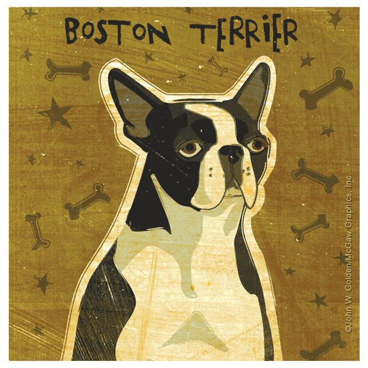 Boston Terrier Dog Beverage Coasters by John W Golden, Set of 12