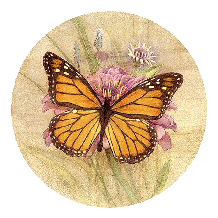 Amber Elegance Butterfly Sandstone Beverage Coasters, Set of 8