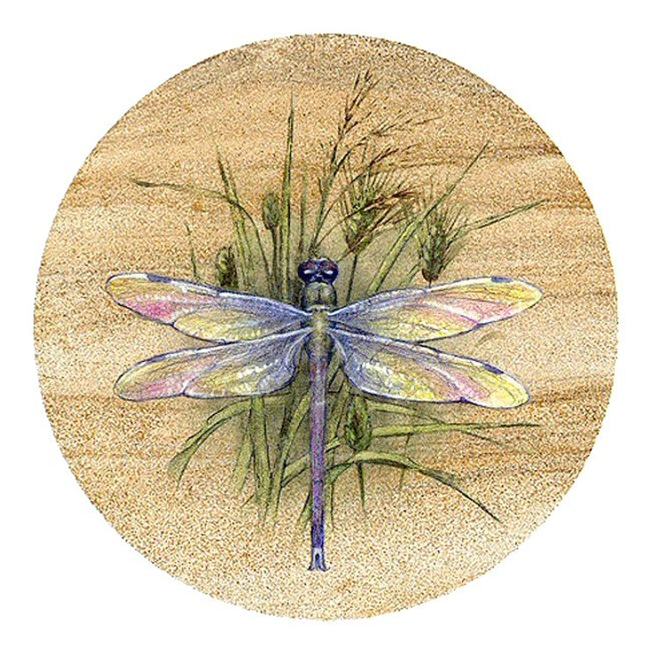 Dragonfly Sandstone Beverage Coasters, Set of 8