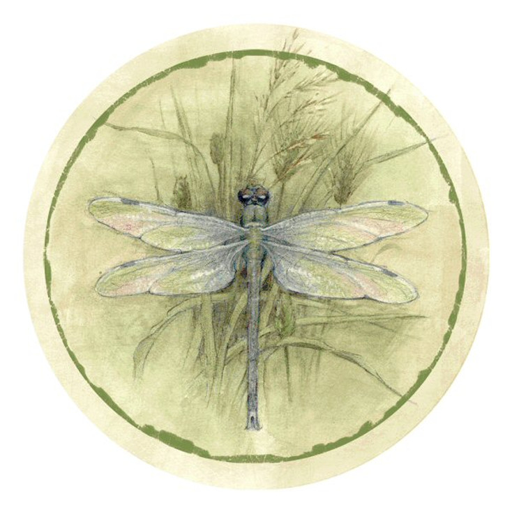 Dragonfly Absorbent Round Beverage Coasters, Set of 8