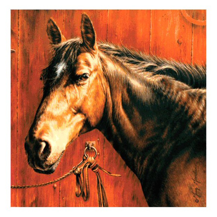 Horse Portrait Absorbent Beverage Coasters by Greg Giordano, Set of 8