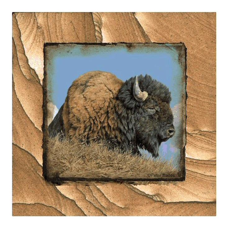 Buffalo Thunder Beast Sandstone Coasters by Peter Eades, Set of 8