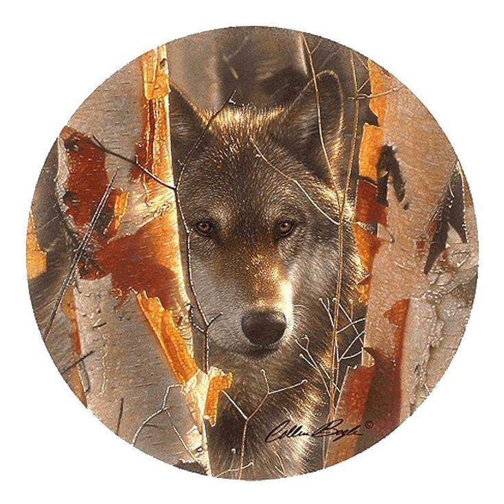 Birch Wolf Sandstone Beverage Coasters by Collin Bogle, Set of 8