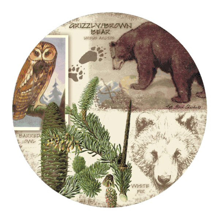 Bear Collage Sandstone Beverage Coasters by K. Ward Thacker, Set of 8