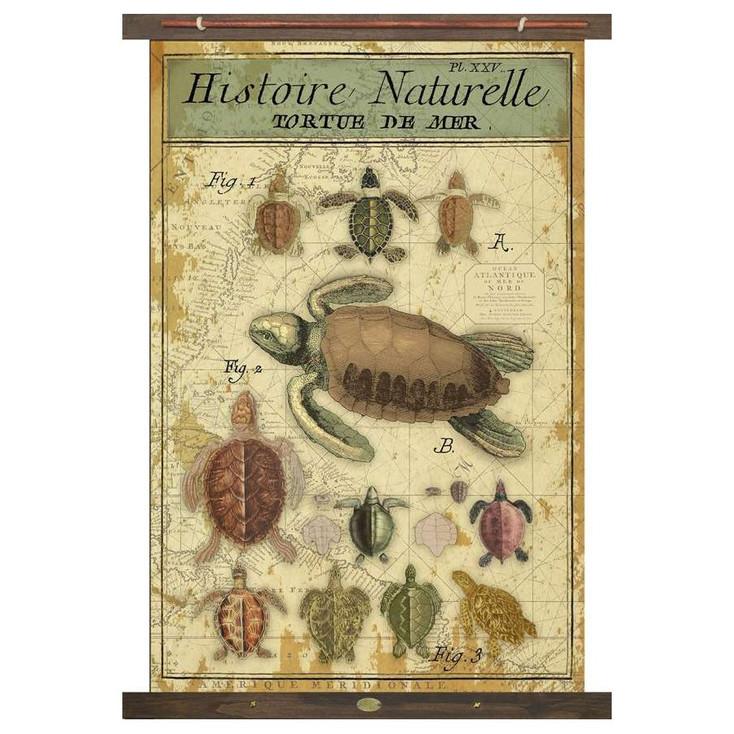 Custom Histoire Naturelle Turtles Tortue De Mer Canvas Tapestry
