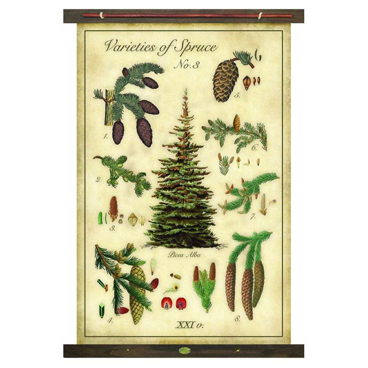 Custom Varieties of Spruce Trees Canvas Tapestry