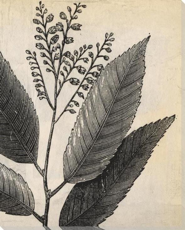 Botanical Etching II Wrapped Canvas Giclee Art Print Wall Art