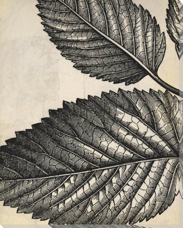 Botanical Etching VIII Wrapped Canvas Giclee Art Print Wall Art
