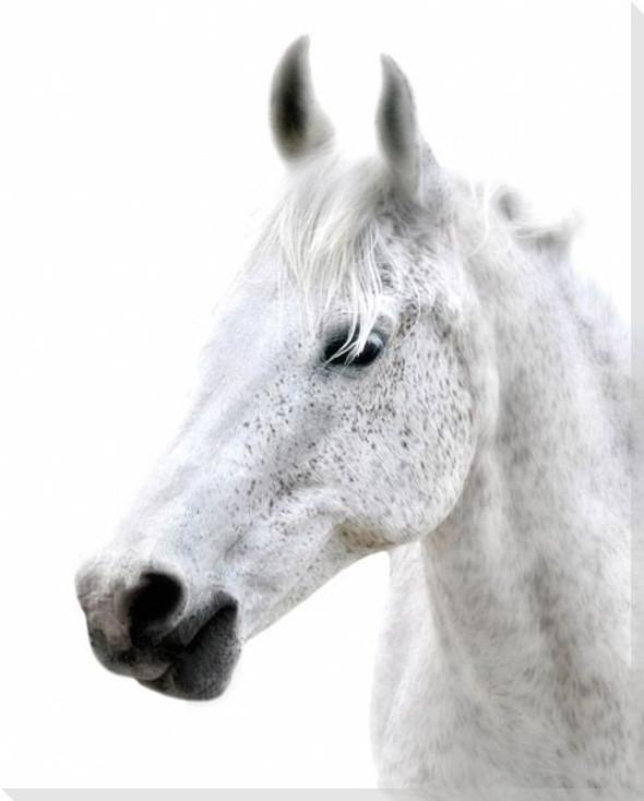 Dream Horse Wrapped Canvas Giclee Art Print Wall Art