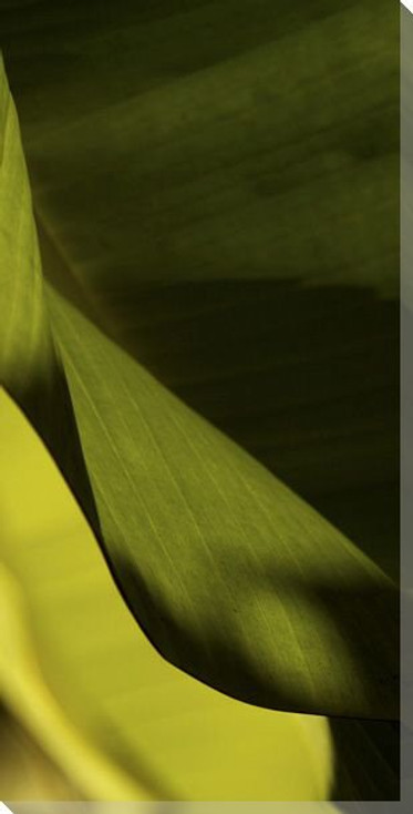 Leaf Detail III Wrapped Canvas Giclee Print Wall Art