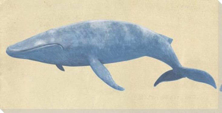 Blue Whale Wrapped Canvas Giclee Print Wall Art