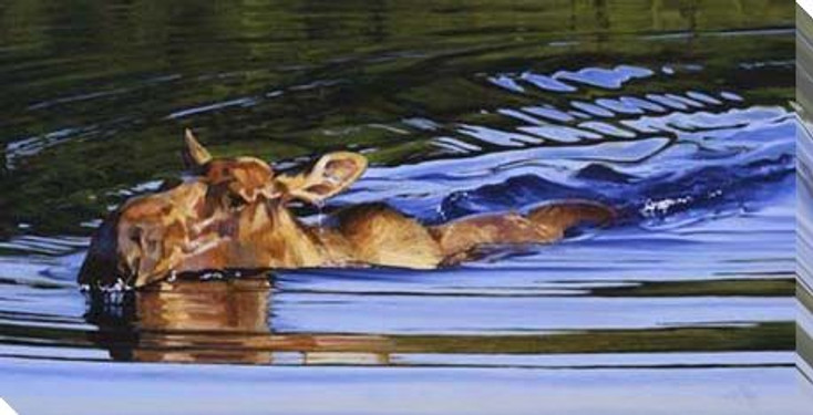 Bathing Beauty Moose Swimming Wrapped Canvas Giclee Print