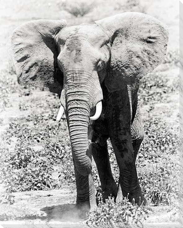 Elephant in the Wild Wrapped Canvas Giclee Art Print Wall Art