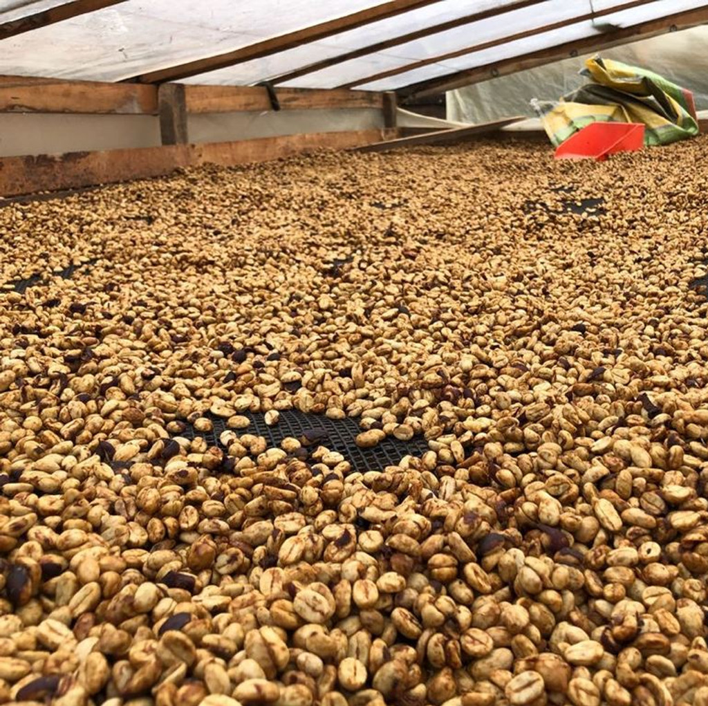honey coffee process