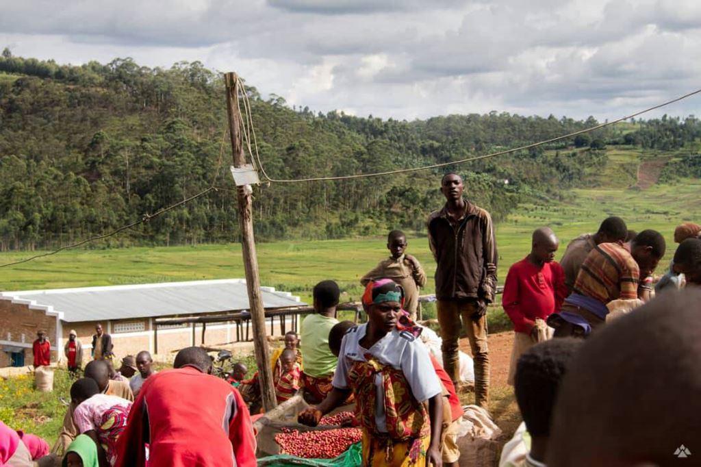 Burundi coffee farm