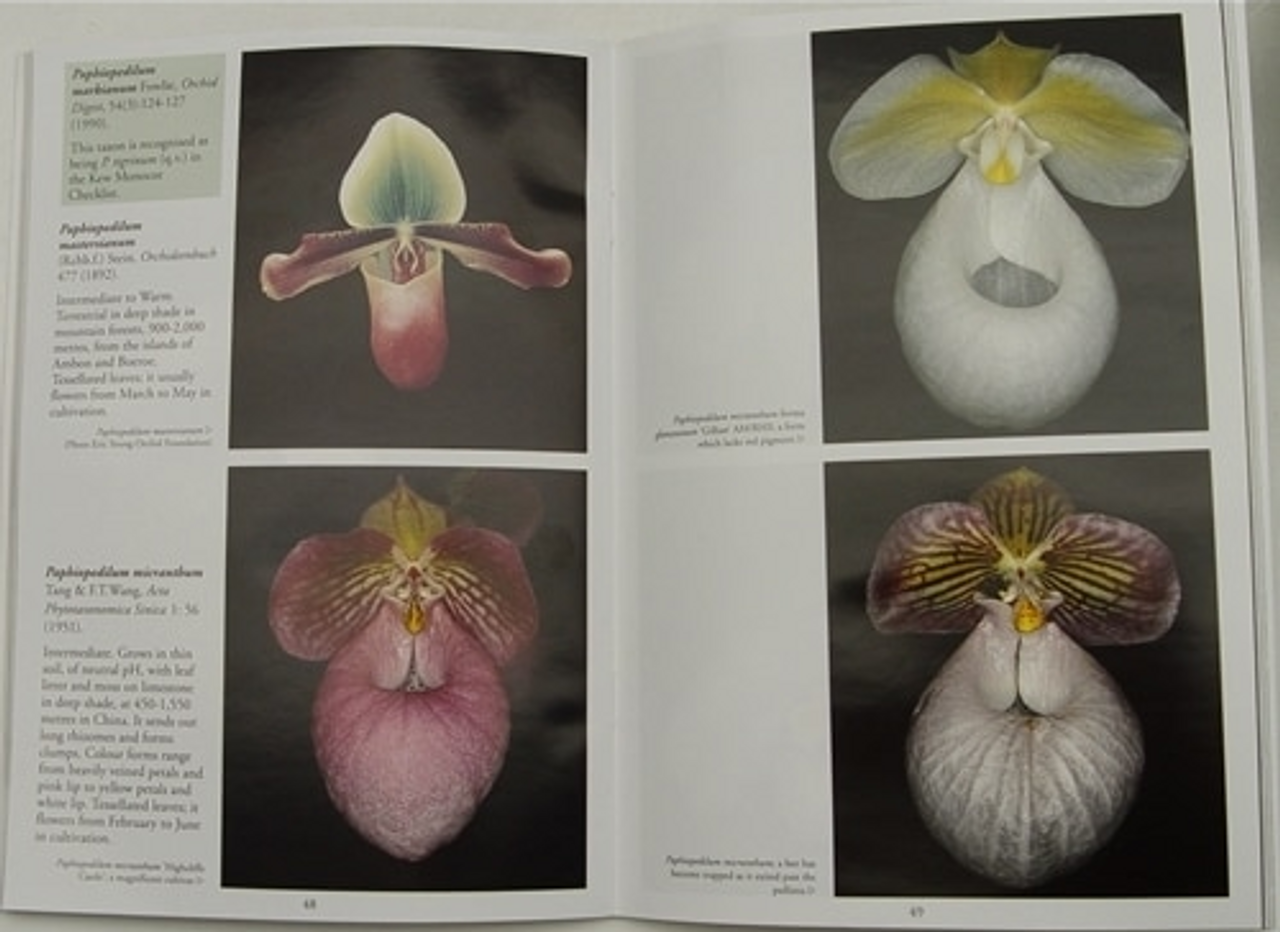 Paphiopedilum Species - The Essential Guide