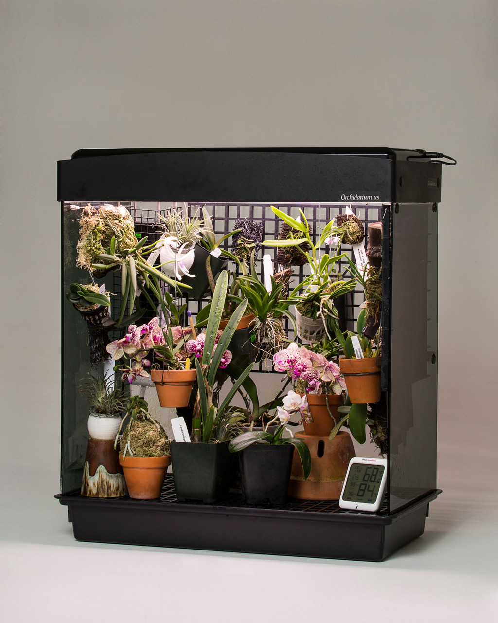 Orchidarium (For Miniatures!)