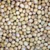 Tyrone Forage Soybeans