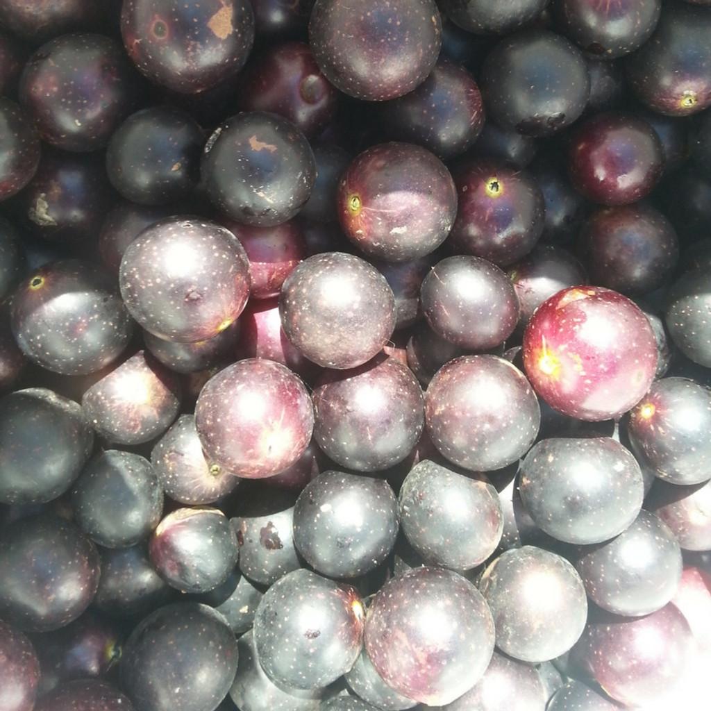 Koinonia Farm Muscadine Grapes