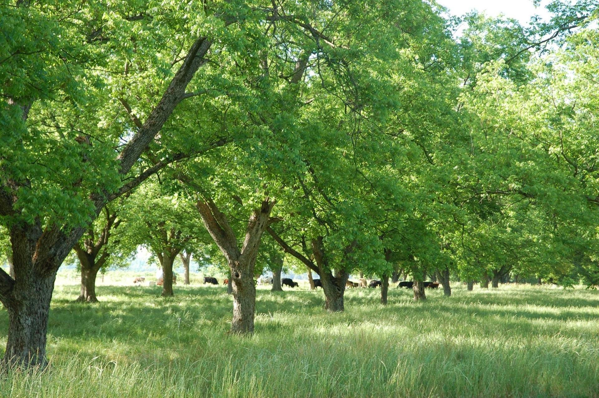 greenorchardwebsitebanner.jpg