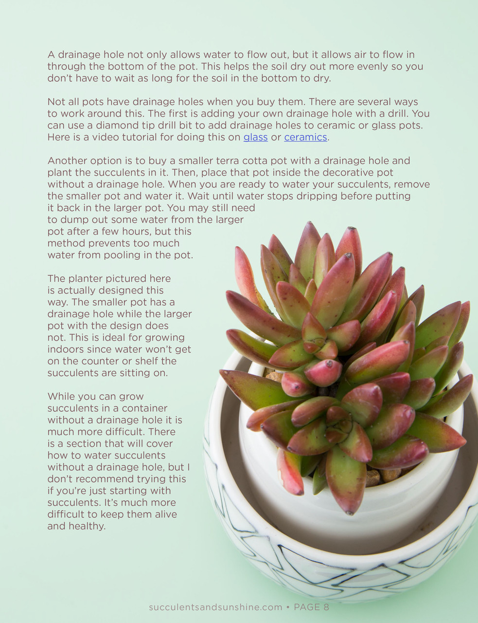 How To Water Succulents An In Depth Guide E Book