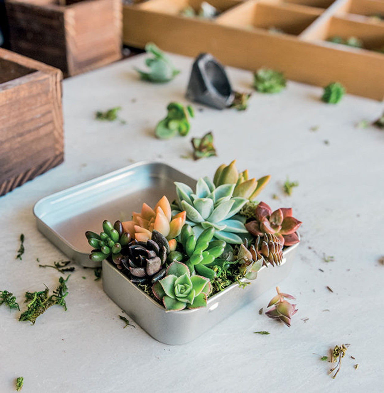 Infinite Succulent Miniature Living Art To Keep Or Share Book
