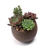 Astrid Pot - Tan - Planted