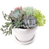 """Alaska Pot & Saucer Set 4.5"""" x 4.25"""" - Planted"""