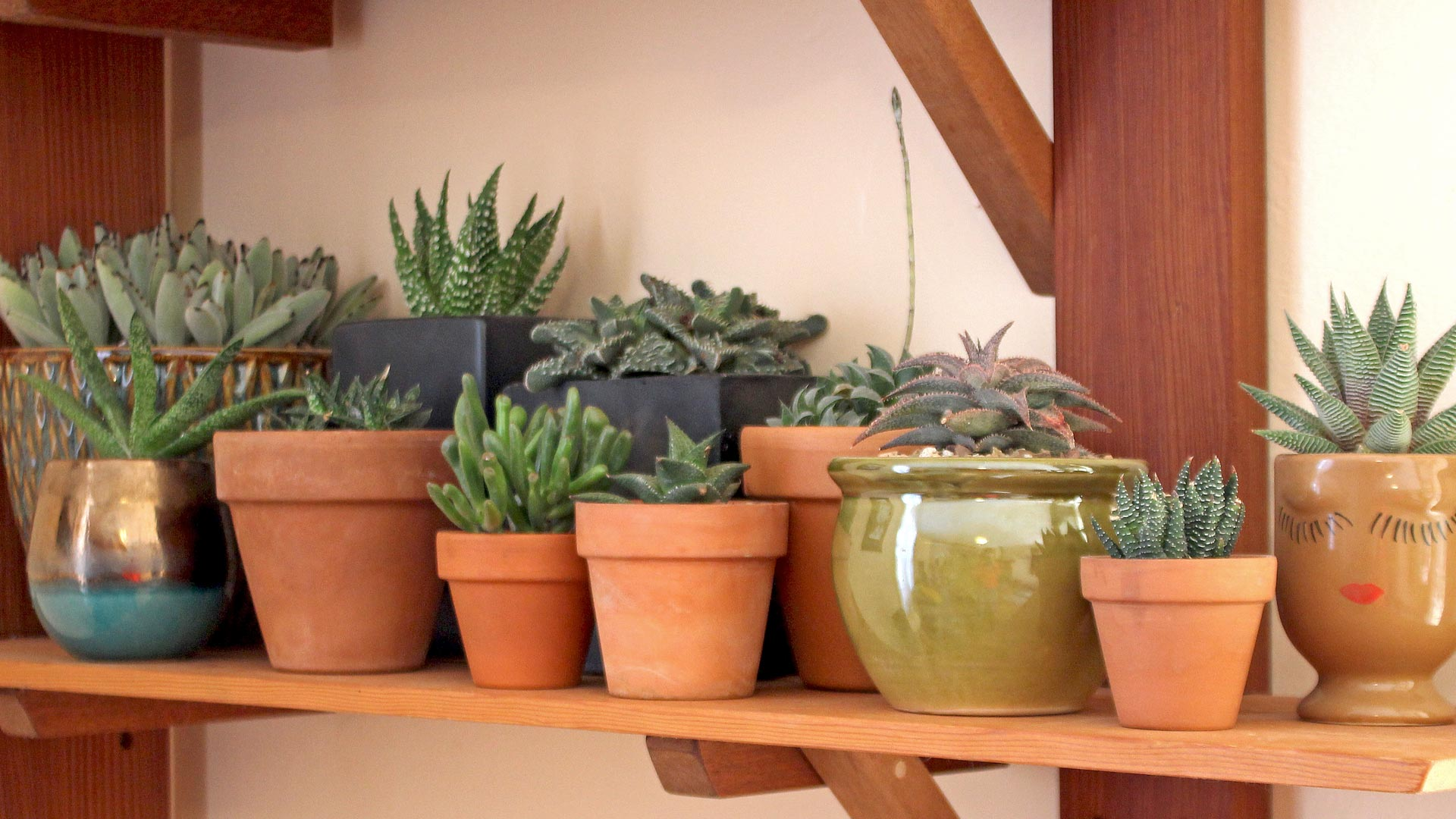 Easiest Indoor Succulents And How To Keep Them Alive Mountain Crest Gardens